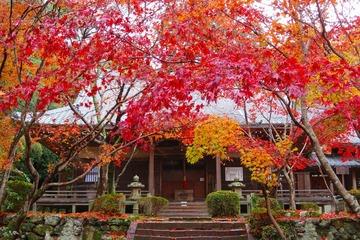 syojiji20191202-06