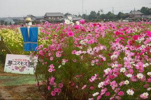 Yumekosumosuen201510181