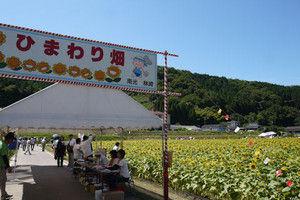 01himawari