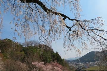tenyakuji20190407-04
