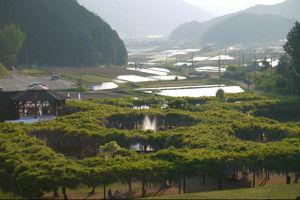 Fujipark201501