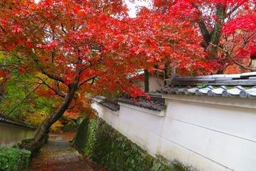 syojiji20191202-02