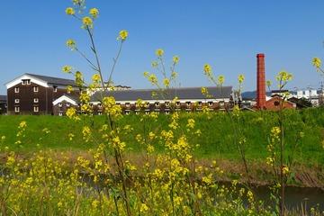 hushimi20200321-03