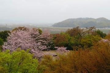 ooyamazaki20190410-03