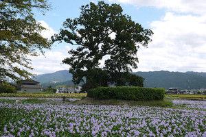 Motoyakushiji03