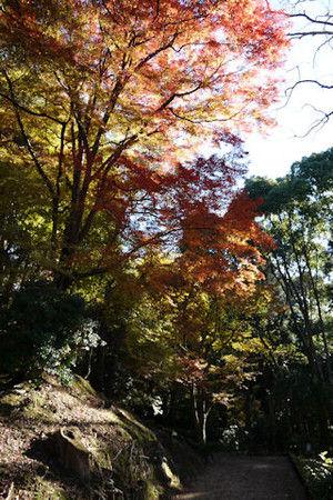 15shinkokaido
