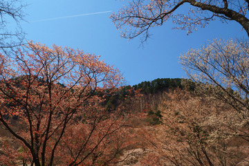byobuiwa20180410-08