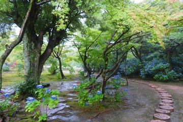 kajuji20200630-04