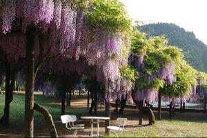Fujipark201503
