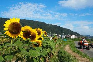 Oharano201509213_2