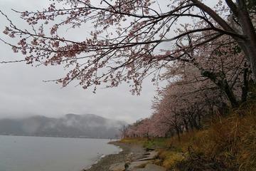 kaizuosaki20190410-03