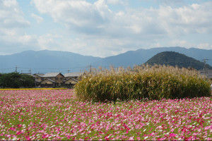 Hujiwarakyuseki201510124