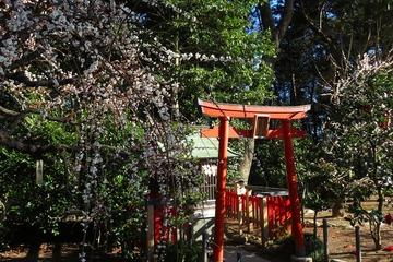 yukijinja20200224-03