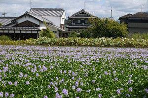 Motoyakushiji05