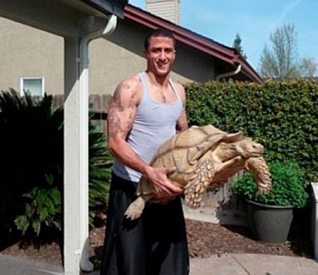 a98755_Tortoise