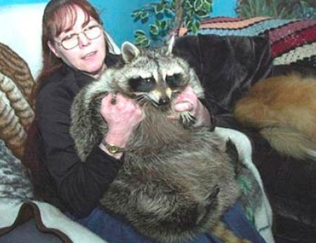 a98755_bandit raccoon