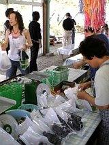 栃木県ぶどう園農業1