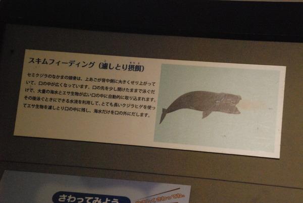 くじら博物館 (23)