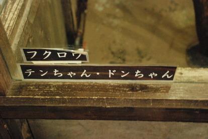 富士花鳥園 (33)
