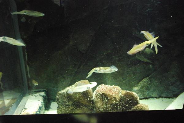 加茂水族館 (6)