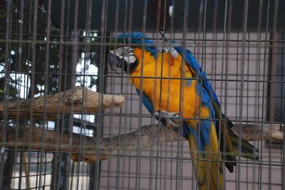 久留米鳥類センター (4)