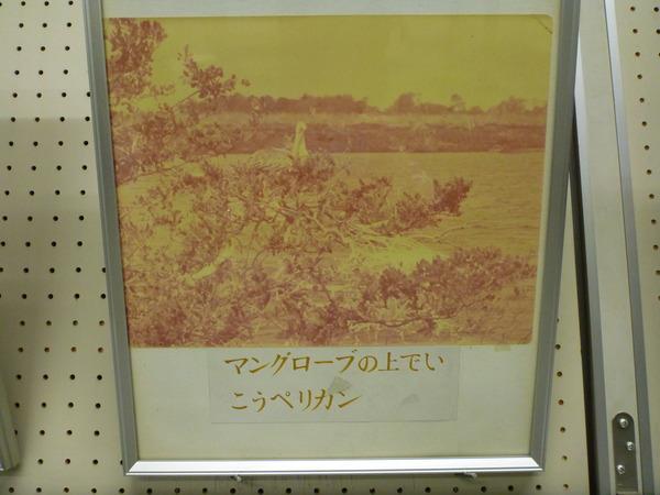 東京海洋大学 水産資料館 (38)