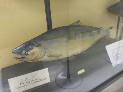 東京海洋大学 水産資料館 (74)
