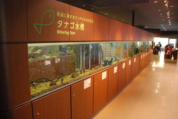 相模川ふれあい科学館 (8)