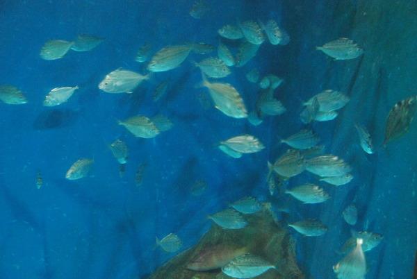 桂浜水族館 (18)