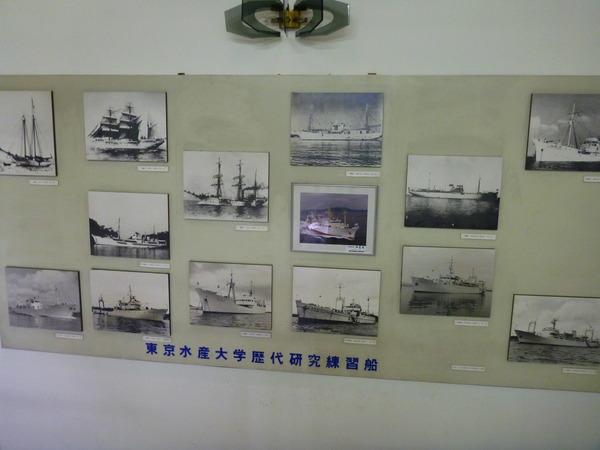 東京海洋大学 水産資料館 (10)