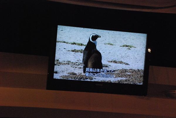 ペンギンのいるBAR (4)