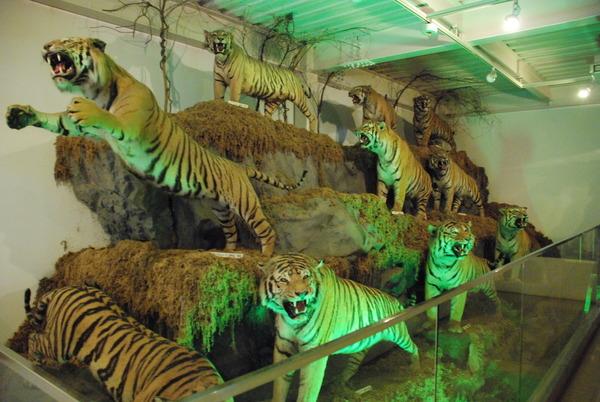 猫の博物館 (6)