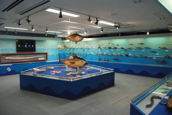 海の文化館 (2)