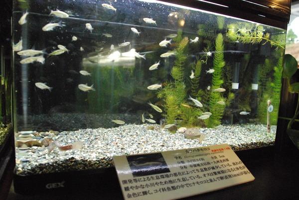 山梨県立富士湧水の里水族館 (6)