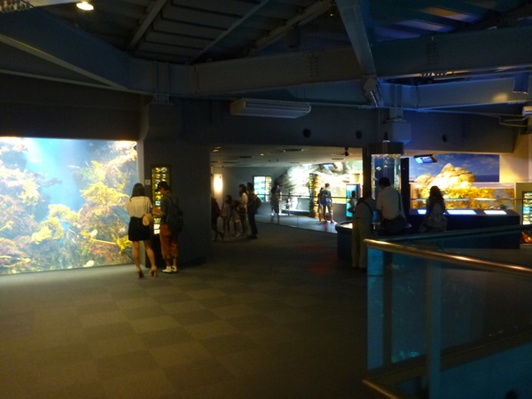 江ノ島水族館 (10)