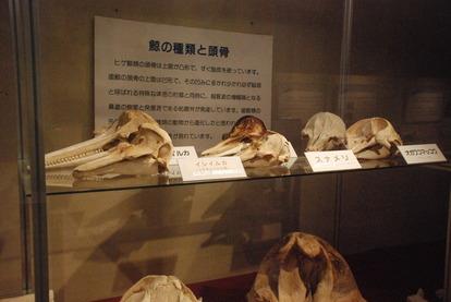 くじら博物館 (27)