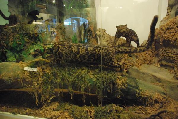 猫の博物館 (7)