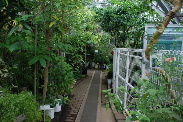 東京都薬用植物園 (11)