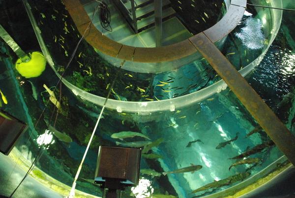 山梨県立富士湧水の里水族館 (30)