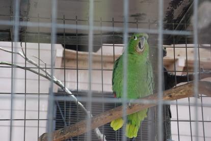 久留米鳥類センター (3)