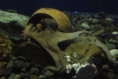 新屋島水族館 (40)