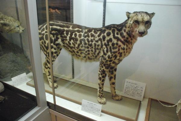 猫の博物館 (12)