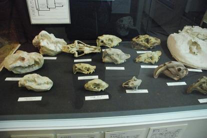 猫の博物館 (11)