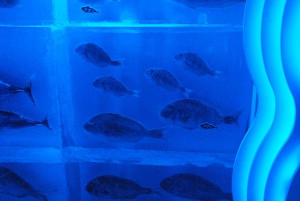 氷の水族館 (11)