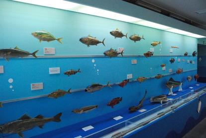 海の文化館 (3)