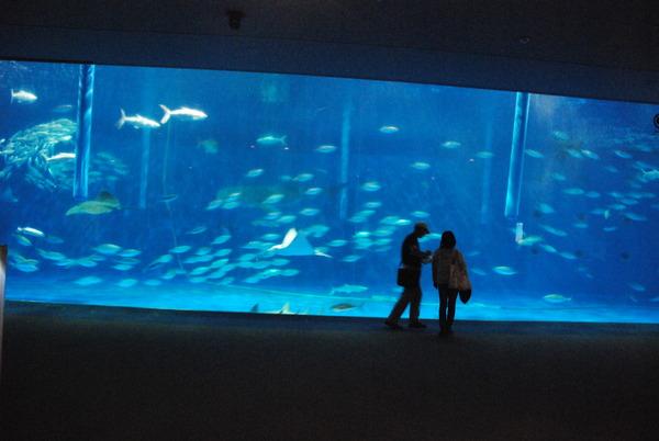 鹿児島水族館 (3)