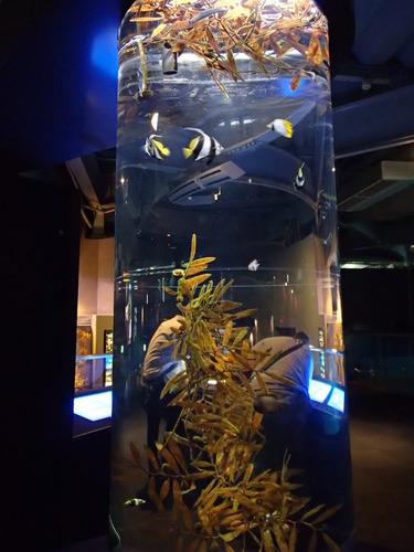 江ノ島水族館 (102)