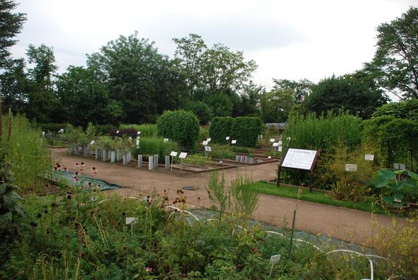 東京都薬用植物園 (3)