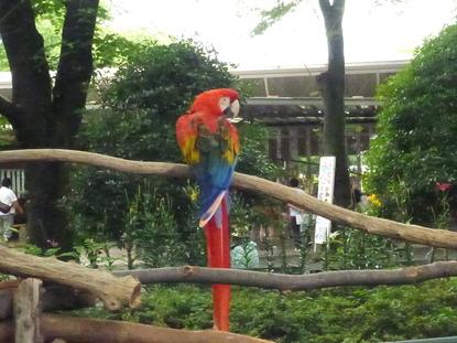 羽村動物園 (28)