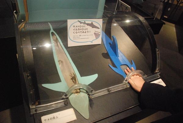 くじら博物館 (34)
